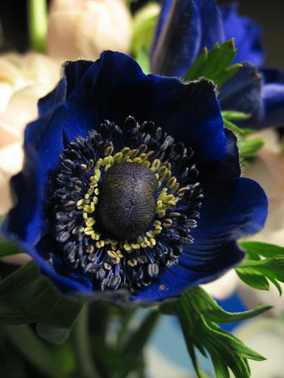Blomst24022010