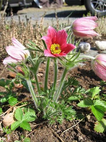blomster-23-04-2009