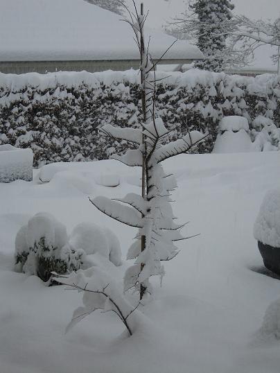 vinter1612200903