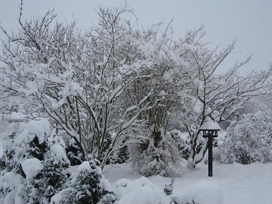 vinter1612200905