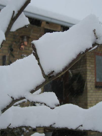 vinter1612200906